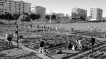Huertos urbanos en Benimaclet. Fuente: valencianews.es